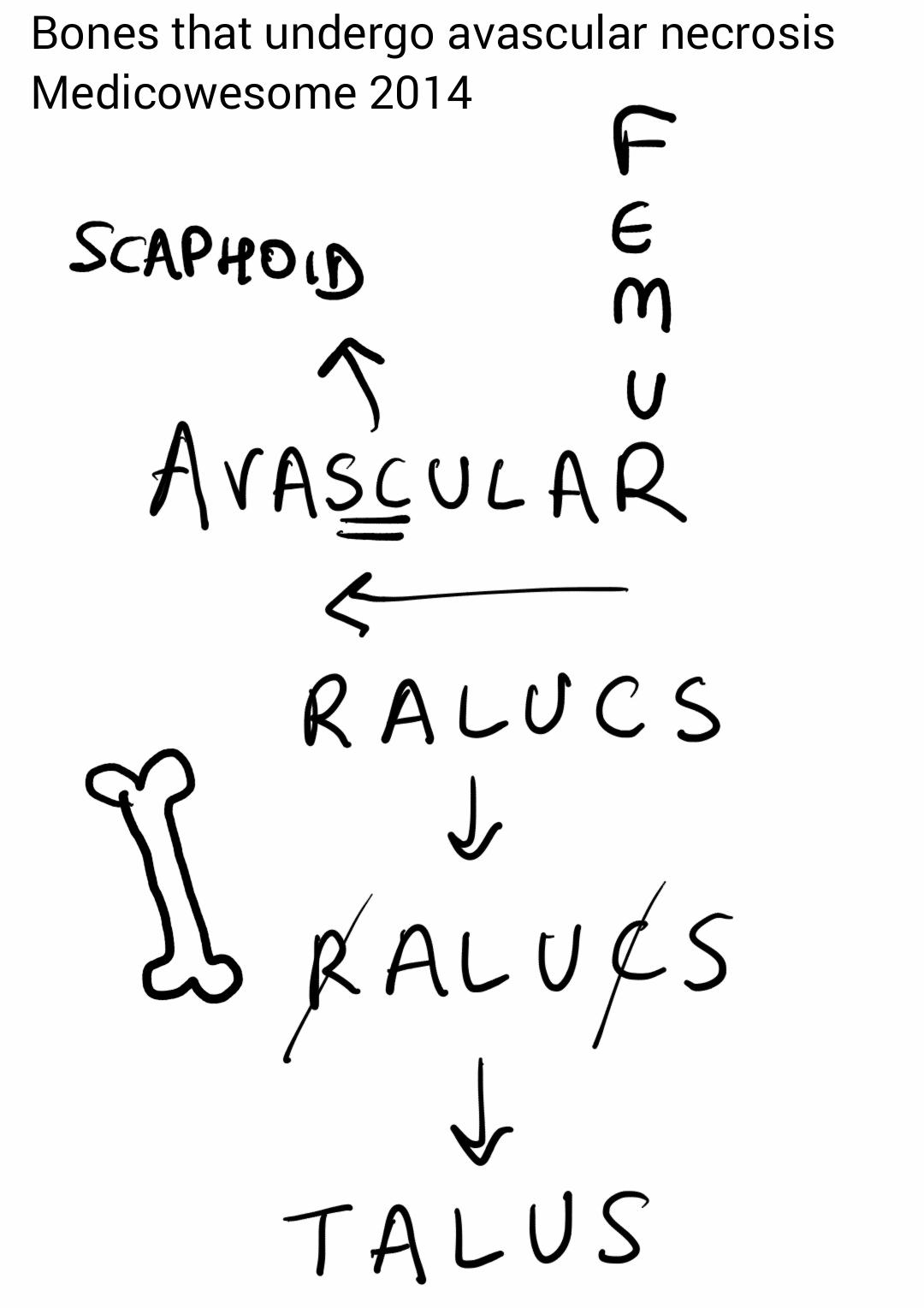 Medicowesome: Bones that undergo avascular necrosis mnemonic