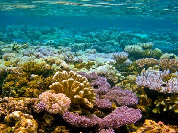 Coral reef, Federated States of Micronesia