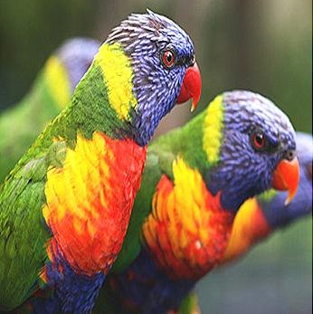 bird-body-wall-feathers