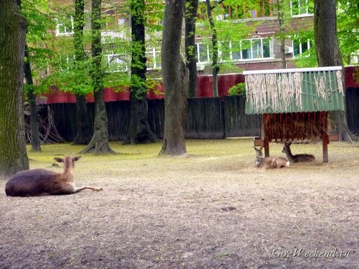 Kiev_Zoo_7.jpg