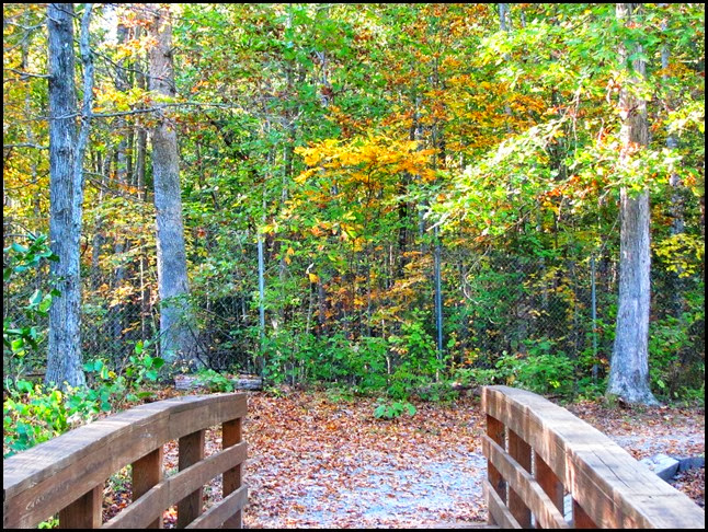 fall bridge path