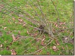 bristling branch node