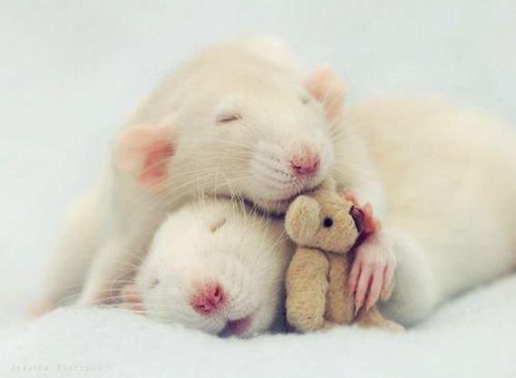 ratones 2