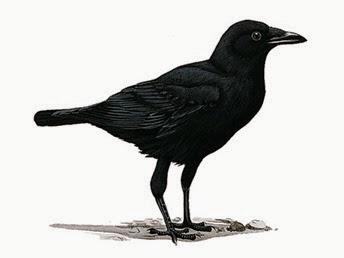fish-crow-01_13589_600x450