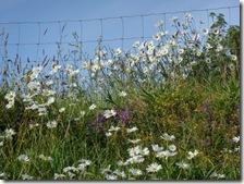 wild flower bank2