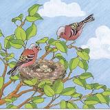 pájaros 002.jpg