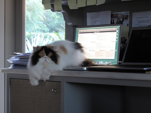 And now Princess Peony is on Martha's desk!  I don't like where this is going!