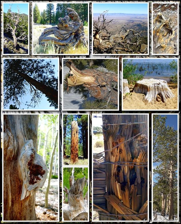 2012 Tree Textures 02
