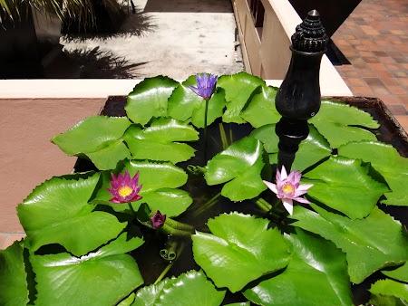 02. Floare de lotus.JPG