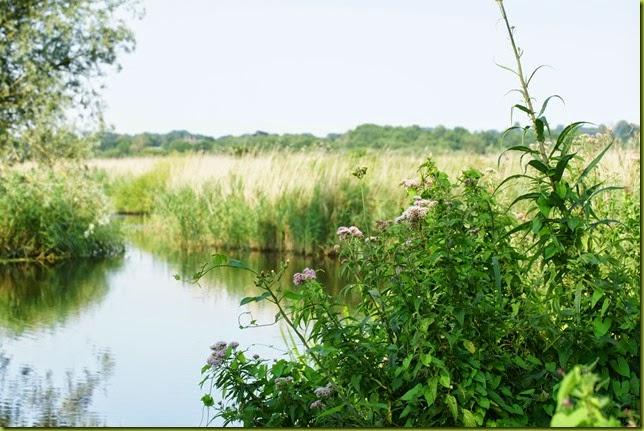 Strumpshaw Fen Nature Reserve