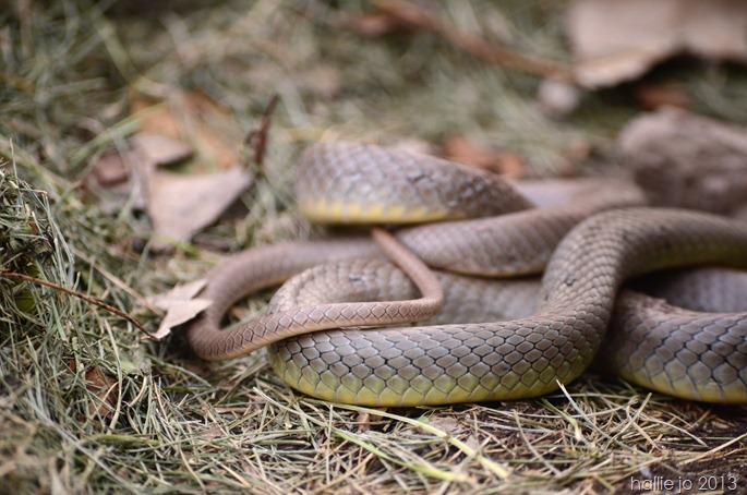 Snake6