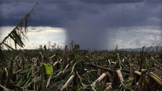 A rare cloud formation is seen amidst destroyed banana plantation four days after Typhoon Bopha left hundreds of people killed and rendered extensive damage to agriculture at Montevista township, Compostela Valley in southern Philippines Saturday, 8 December 2012. Search and rescue operations following the typhoon that killed at least 600 people and left several hundred more missing and tens of thousands homeless have been hampered in part because many residents of this ravaged farming community are too stunned to assist recovery efforts, an official said Saturday. Bullit Marquez / AP Photo