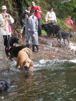 Dogs Trekking 4 (323)