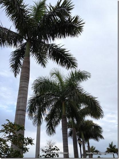 Florida_Jan2014 003