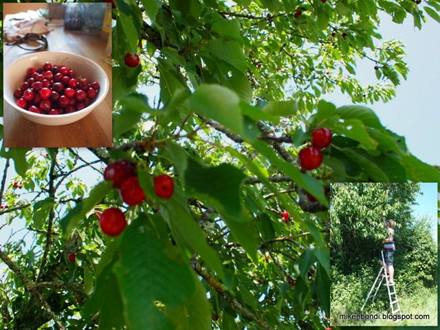 2011-05-24 Cherry picking
