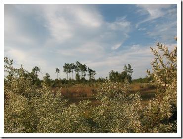 2012-10-16 Ocala (8)