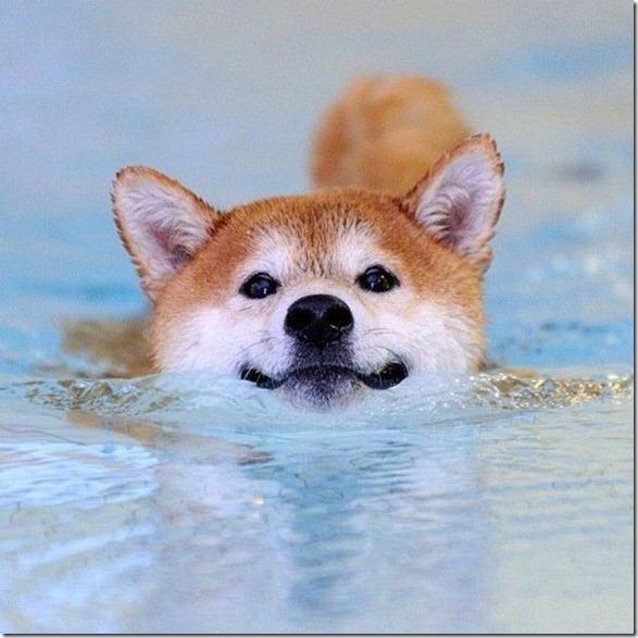 funny-animals-cute-26