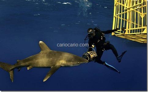 imagens Submarinas (3)