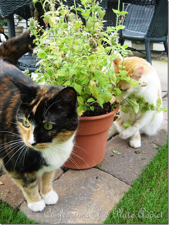 Kitties and Catnip