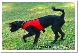 Joy Linda!