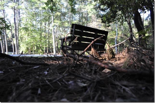 10-3011 bike  woods 127