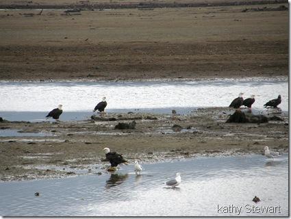 Eagles at the bay