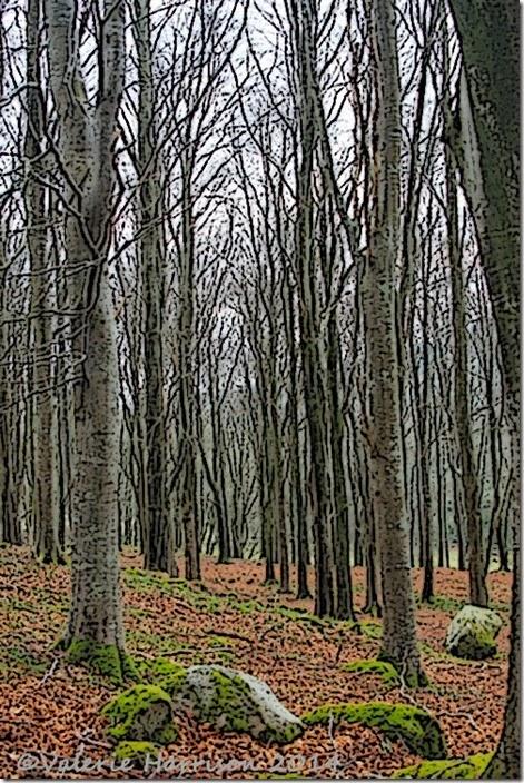 12-beech-woods