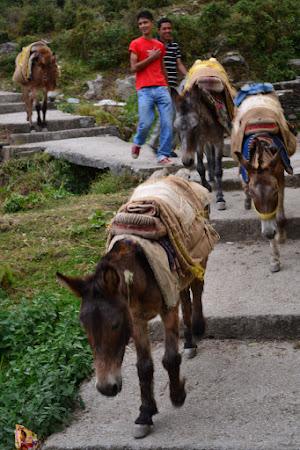 Imagini Dharamsala: magari cu samari.JPG