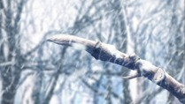 [Commie] Fate ⁄ Zero - 25 [76AFDE9C].mkv_snapshot_19.00_[2012.06.23_16.07.52]