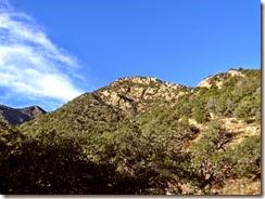 Madera Canyon Hike  Jan 28 005