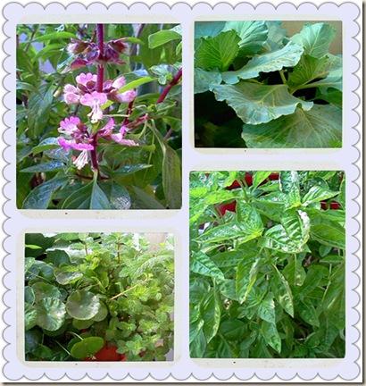 Little Garden (Collage)