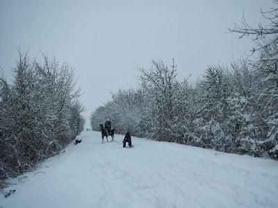horse sledding2.JPG