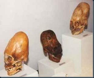 cranios_alongados_nasca_peru