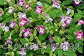 Glória Ishizaka -   Kyoto Botanical Garden 2012 - 127