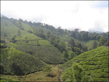 Munnar Day Out V