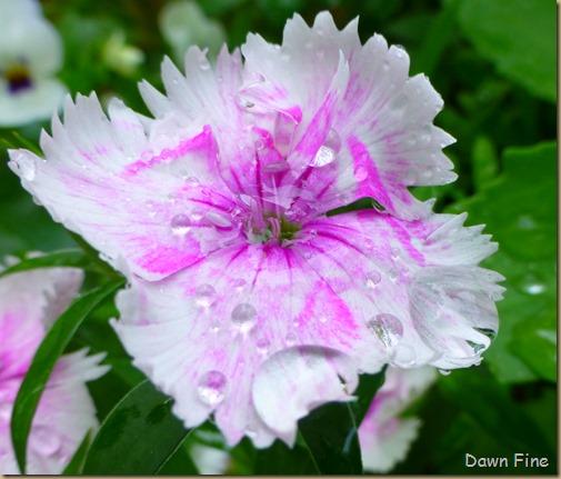 flowersbirds_106