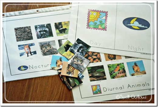 Noctural and Diurnal Animals Sorting (Photo from Spell Outloud)