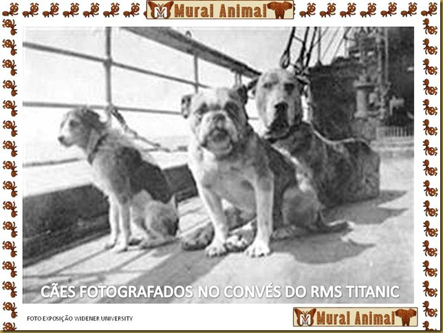 animais_titanic (2)