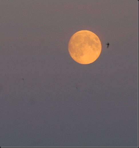 kuu lokit 004