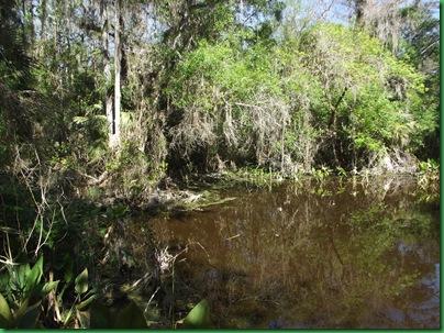 Fakahatchee,  Collier-Seminole, Pather NWR & Chokoloskee 074
