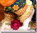 Worshiping Krishna's lotus feet