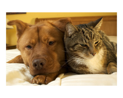 Dog-and-cat-together-Photographic-Print-C12515394.jpeg