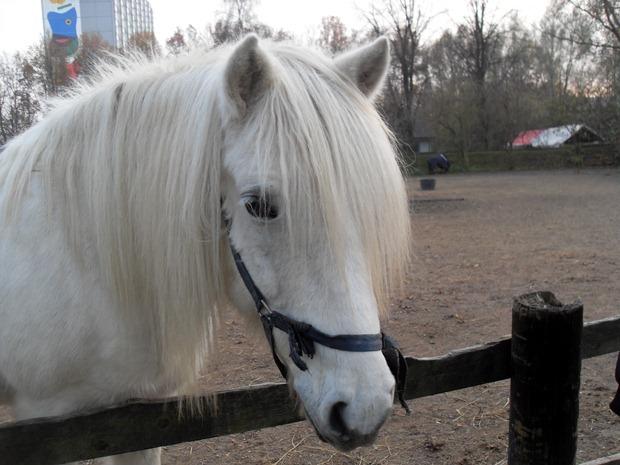 Hestene ved Ungdomsskolen