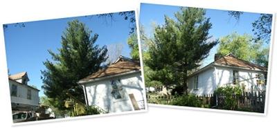 View pine tree