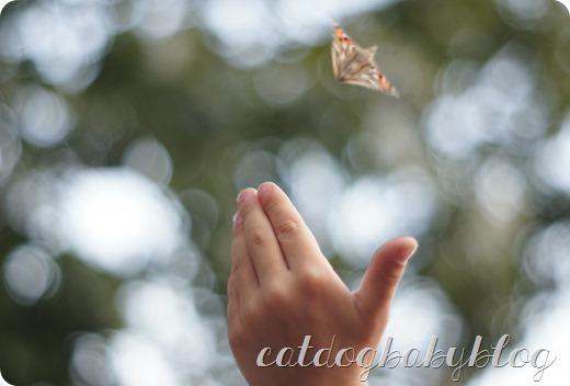 2013-09-11 butterfly (31)