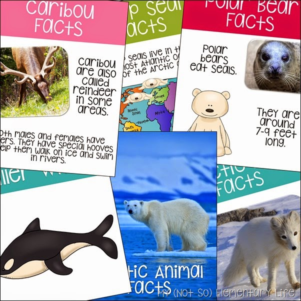 arctic animals fact information