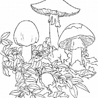free-printable-psychedelic-coloring-pages-2_LRG.jpg