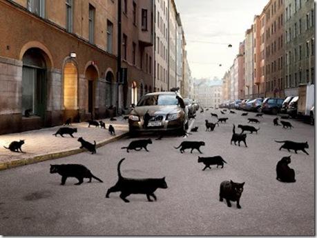 Черная кошка - суеверие