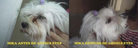 MIKA ANTES Y DESPUES