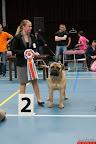 20130510-Bullmastiff-Worldcup-1254.jpg